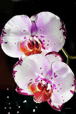 Photograph - Twin Orchids by Phyllis Denton