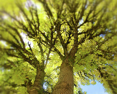 Photograph - Twin Trees by Bonnie Bruno