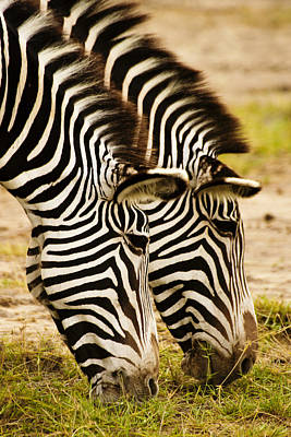 Photograph - Twins In Stripes by Michele Burgess