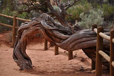 Photograph - Twisted Tree by Frank Madia
