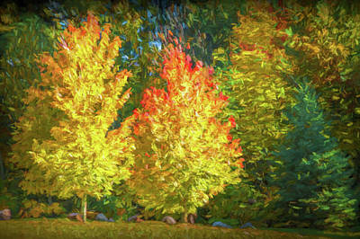 Photograph - Two Colorful Autumn Trees by Randall Nyhof