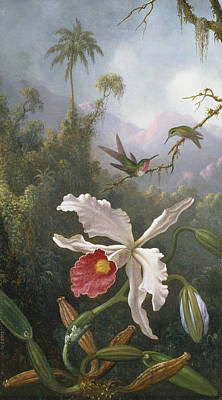 White Orchid Painting - Two Hummingbirds Above A White Orchid by Martin Johnson Heade