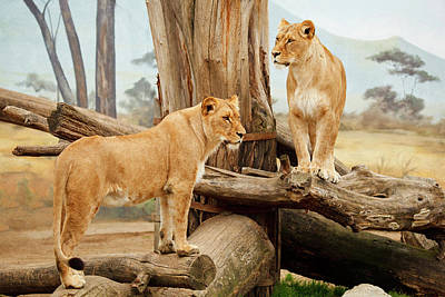Photograph - Two Lionesses by Ellen Henneke