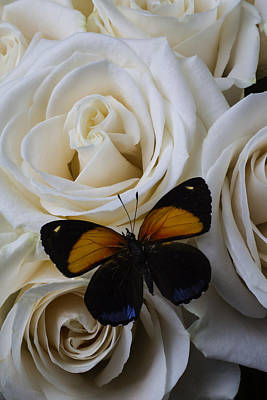 Two Tone Butterfly Art Print by Garry Gay