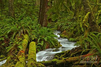 Photograph - Olympic Wilderness Tranquility by Adam Jewell
