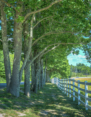 Pineland Farms Photograph - Under The Trees by Jane Luxton
