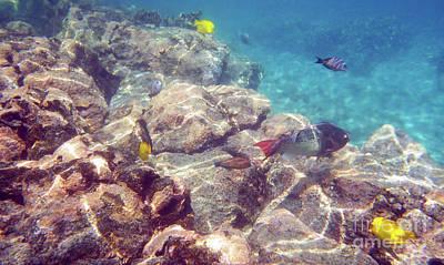 Photograph - Underwater Beauty by Karen Nicholson