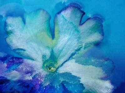 Photograph - Underwater Flower Abstraction 7 by Lorella Schoales