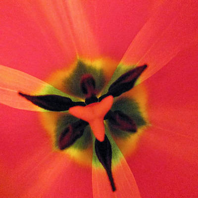 Photograph - In My Garden by Rosanne Licciardi