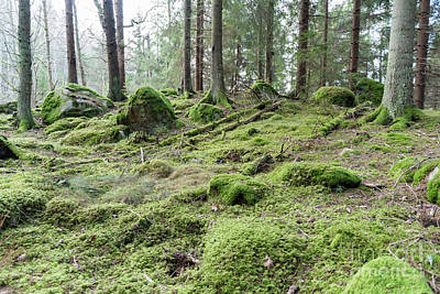 Photograph - Untouched Old Forest by Kennerth and Birgitta Kullman