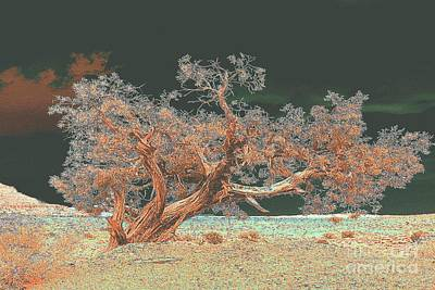 Art Print featuring the photograph Unusual Tree - Digital Painting by Merton Allen