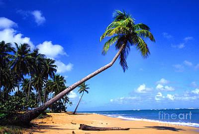 State Love Nancy Ingersoll - Vacia Talega Beach by Thomas R Fletcher