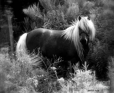 Photograph - Vanity by Elfriede Fulda