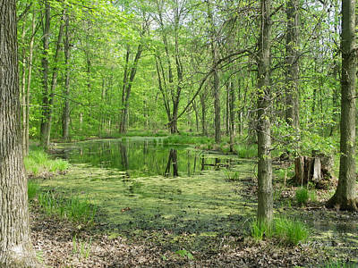 Photograph - Vernal Pool by Peggy King