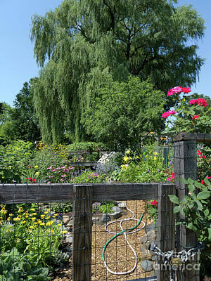 Photograph - Victory Garden Lot And Willow Tree, Boston, Massachusetts #30958 by John Bald