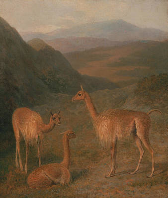 Painting - Vicunas by Jacques-Laurent Agasse