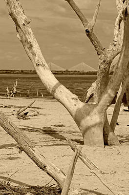 View Of The Cooper River Bridge From The Boneyard In Sepia Art Print by Suzanne Gaff