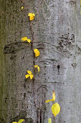 Photograph - Vine Climber by Deborah  Crew-Johnson