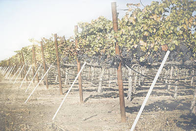 Background Photograph - Vineyard In Autumn With Vintage Instagram Style Filter by Brandon Bourdages