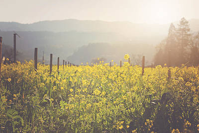 Napa Valley Digital Art - Vineyard In Spring With Vintage Instagram Film Style Filter by Brandon Bourdages