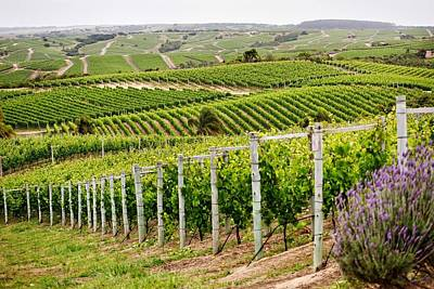 Vineyard Photograph - Vineyard by Jackie Russo