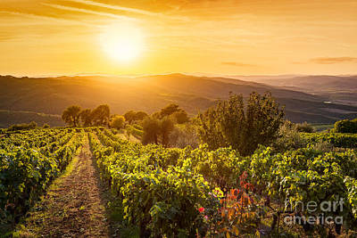 Vineyard Landscape In Tuscany, Italy. Wine Farm At Sunset Art Print
