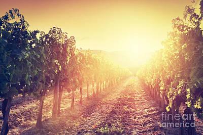 Vineyard Landscape In Tuscany Print by Michal Bednarek
