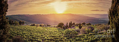 Photograph - Vineyard Landscape Panorama In Tuscany, Italy. Wine Farm At Sunset by Michal Bednarek