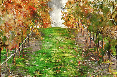 Wine Decor Photograph - Vineyard Sunset by Brandon Bourdages