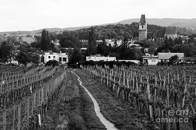 Cslanec Photograph - Vineyard Walkway by Christian Slanec