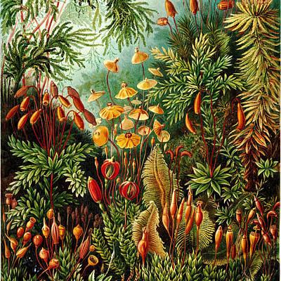 Haeckel Digital Art - Vintage Botanical by Bonnie Bruno