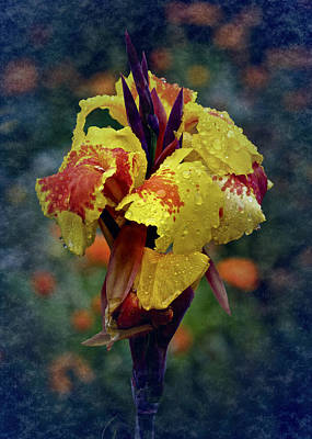 Canna Photograph - Vintage Canna Lily by Richard Cummings
