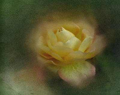 Art Print featuring the photograph Vintage October Rose  by Richard Cummings