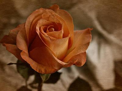 Art Print featuring the photograph Vintage Orange Rose by Richard Cummings