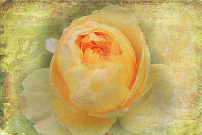 Photograph - Vintage Rose by Lali Kacharava