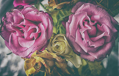 Metallic Sheets Photograph - Vintage Rose by Martin Newman