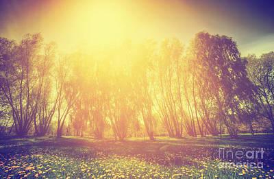 Dandelion Photograph - Vintage Spring Sunny Park by Michal Bednarek
