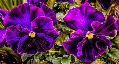 Photograph - Violets by Lilia D