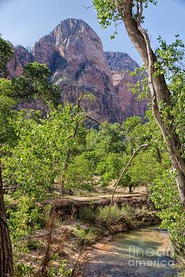 Photograph - Virgin River At Zion by Peggy Hughes