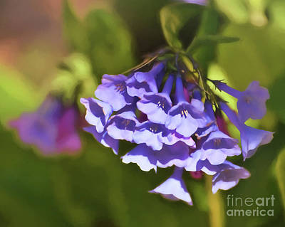 Photograph - Virginia Bluebells  by Kerri Farley