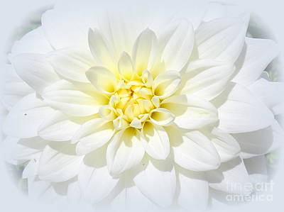 Photograph - Vision In White by Ed Weidman