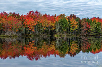 Photograph - Vivid Reflections by Karin Pinkham