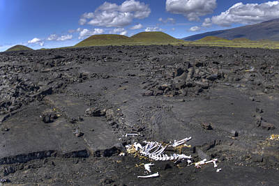 Photograph - Cinder Cones And Bones by Joe  Palermo