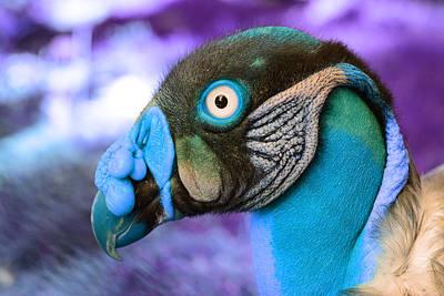 Photograph - Vulture by Artistic Panda