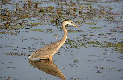 Keith Richards - Wading Heron by Linda Kerkau