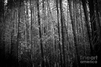 Photograph - Waihou Spring Trail Waihou Spring Forest Reserve Maui Hawaii by Sharon Mau