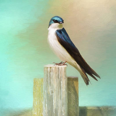 Photograph - Waiting - Bird Art by Jordan Blackstone