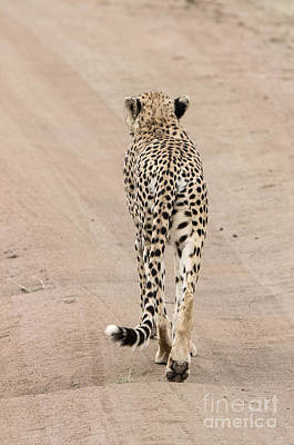 Cheetah Digital Art - Walking Away by Pravine Chester