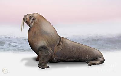 Walrus Painting - Walrus Odobenus Rosmarus - Marine Mammal - Walross by Urft Valley Art
