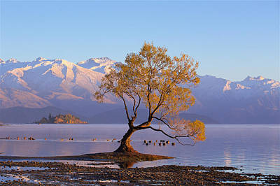 Photograph - Wanaka Tree by Evgeny Vasenev